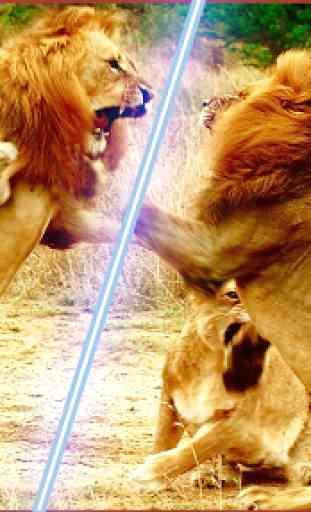 Selvaggio Italiano Lions Lotta 2